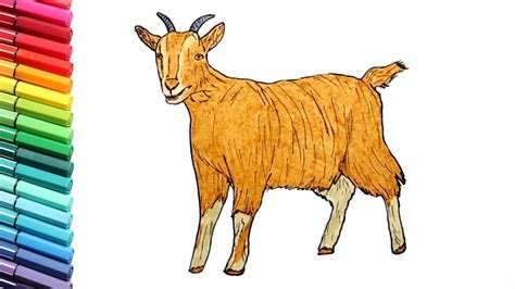 goat colors drawing and coloring a goat learning farm animals color