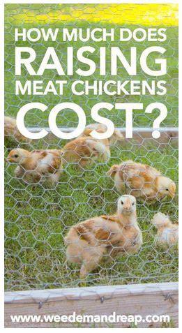 Backyard Chickens Cost 1000 Ideas About Raising On Raised Garden