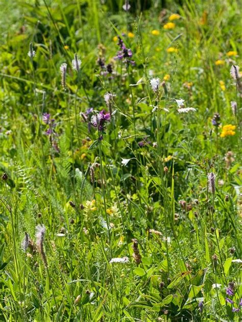 plants in the tropical grassland grasslands more diverse than forests in small areas