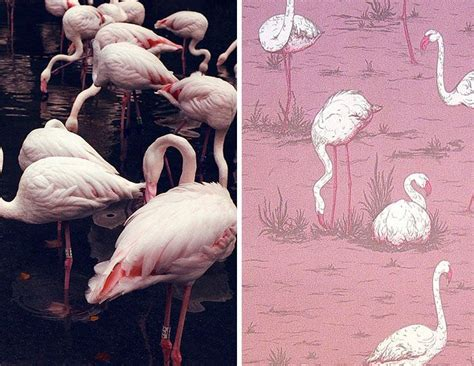 crown wallpaper flamingo 1000 images about think pink on pinterest flamingos