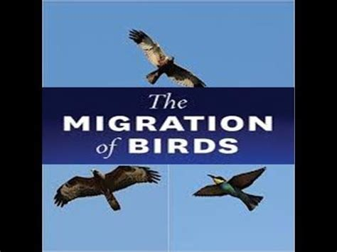 why do birds migrate educational videos for kids