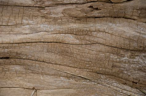 woodworking logs magnera wood texture home garden and more