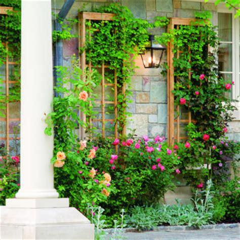 climbing outdoor plants planning a garden garden design ideas