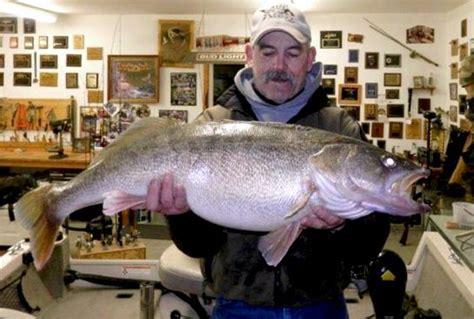 Record Washington State 20 Pound State Record Walleye In Washington State