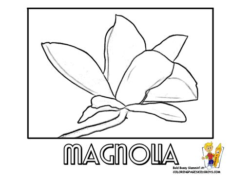 coloring pages of magnolia flowers magnolia coloring pages