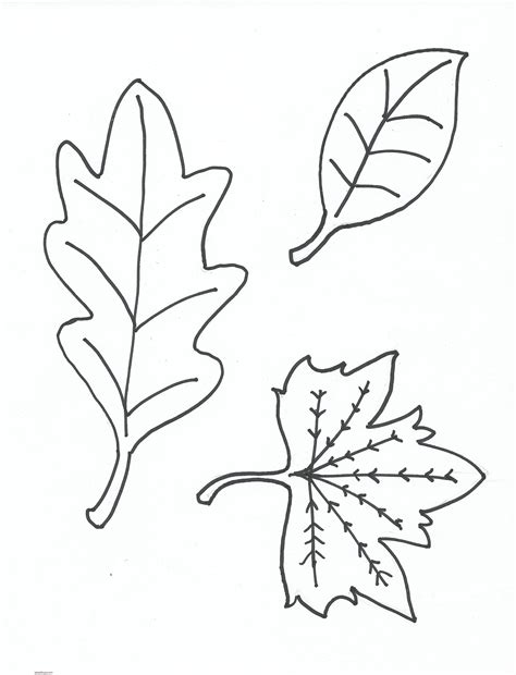 imagenes para colorear hojas dibujos de hojas para colorear