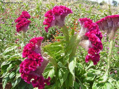 foto di fiori strani strani fiori