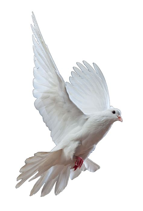 dove png