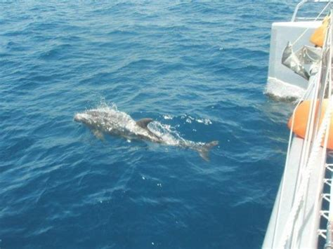 ft lauderdale to key west boat shuttle sail and swim catamaran cruise in fort lauderdale fl