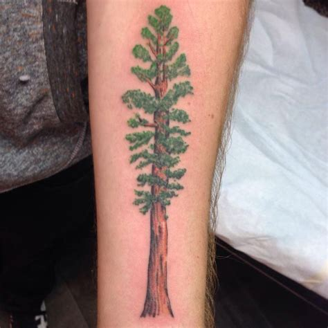 redwood tree tattoos pictures to pin on pinterest tattooskid