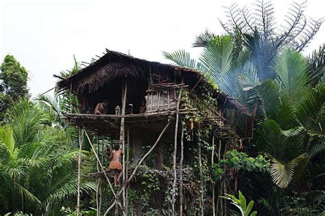 about korowai tribe tree houses in papua new guinea and