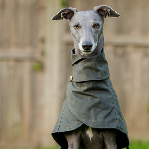 Whippet Wrap Around Coat - Redhound For Dogs