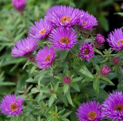 Vaste Planten Die Hele Zomer Bloeien by Vaste Planten Kleuren Je Tuin Jaarrond Nieuws