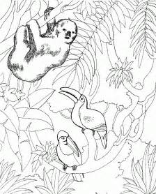 Coloring Pages Of Zoo Animals For Preschool