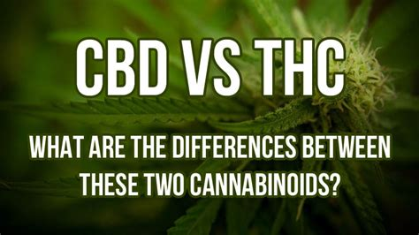 Cbd Detox Thc by Cbd Vs Thc What Are The Differences Between The Two