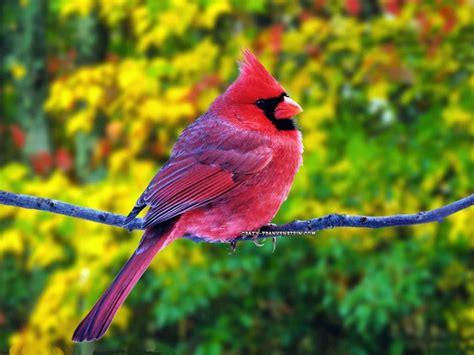 google images birds google image result for http 4 bp blogspot com