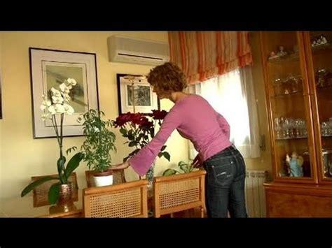 como adornar tu casa  plantas youtube