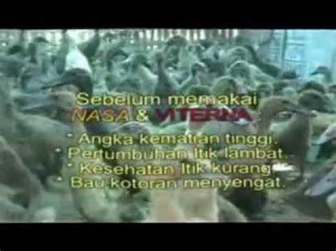 Jual Dod Bebek Peking Yogyakarta ternak itik doovi
