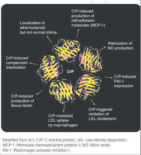c protein coagulation c reactive protein crp actions on coagulation
