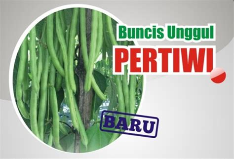 Benih Kacang Panjang Pertiwi buncis unggul pertiwi benih pertiwi