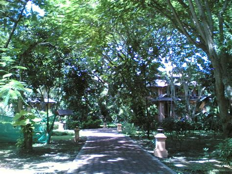 Tao Garden by Tao Garden In The Morning 2 By Hanukara On Deviantart
