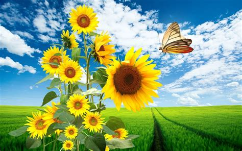 Nature De Sol by Wallpapers Sols Nature Sunflowers Hd Wallpapers