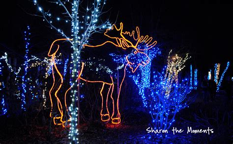 Columbus Zoo Christmas Lights 2014 Christmas Decore Columbus Zoo Lights 2014