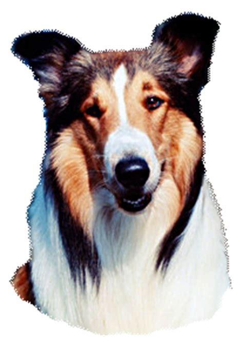 what type of is lassie lassie web lassie facts