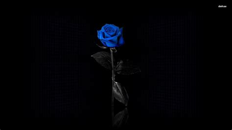 blue rose wallpapers hd pictures one hd wallpaper
