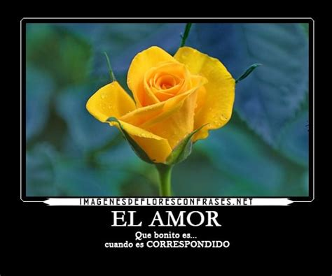 Imagenes Flores Amarillas Con Frases | im 225 genes de rosas amarillas con frases bonitas