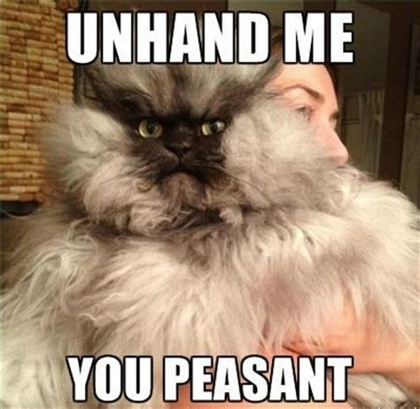 Meme The Cat - the best damn cat memes on the internet craveonline