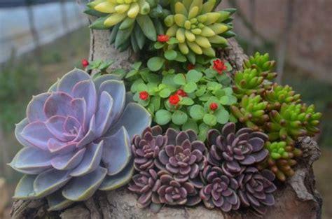 piante da interni poca luce piante per interni vivono con poca luce 6 soluzioni