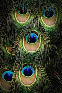 tipi di vasi tipi di vasi di put piume di pavone in russelmobley
