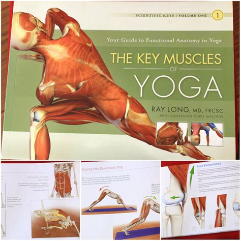 key muscles of yoga 1607432382 the key muscles of yoga scientific keys volume i download pdf file