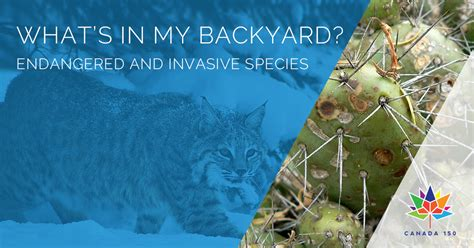what s in my backyard kelowna museums