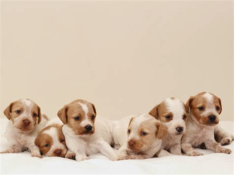 imagenes de perritos perritos related keywords perritos long tail keywords