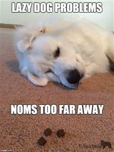 Lazy Day Meme - cosmopolitan s sliko poka蠕i kako se trenutno po芻uti蝪