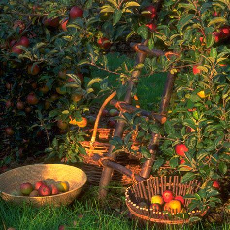 september gardening jobs grayshaw yeo gardening