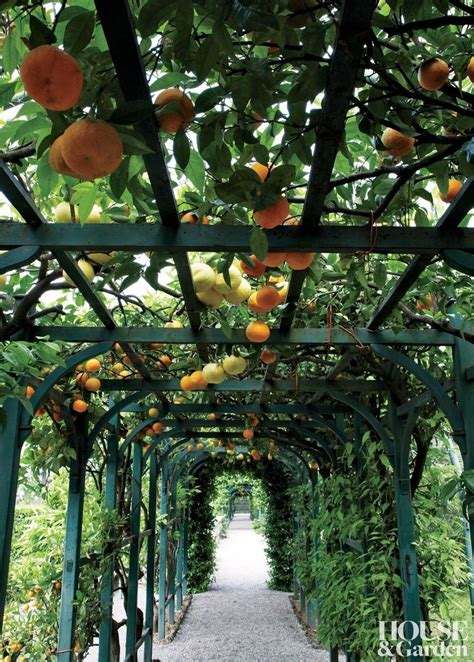 patio orange tree best 25 italian garden ideas on italian villa