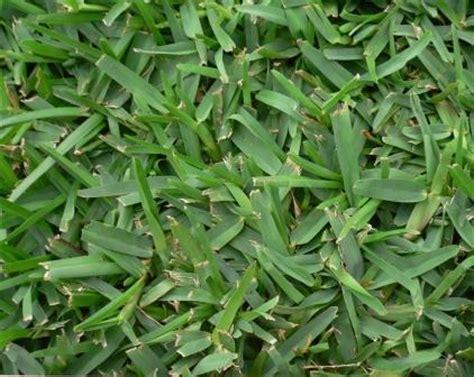 strathayr instant lawn melbourne  victoria wide
