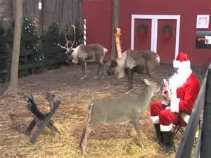 Reindeercam com santa feeding reindeer youtube