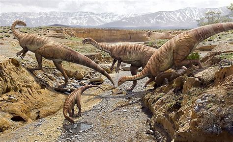 dinosauri volanti i dinosauri terre di confine magazine