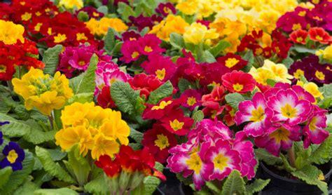 fiori stagionali san valentino spazio a bouquet di fiori stagionali