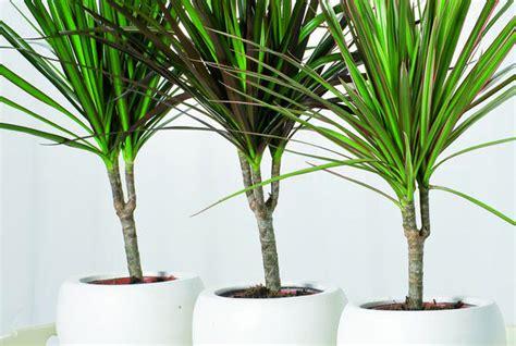 piante ufficio 10 piante da ufficio per migliorare l e l umore