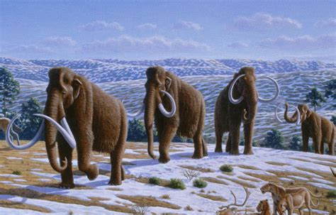 wooly mammoth ice age duner s blog june 11 frozen woolly mammoth found