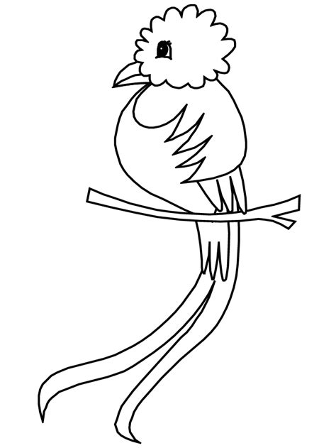 quetzal bird coloring page birds quetzal animals coloring pages coloring book