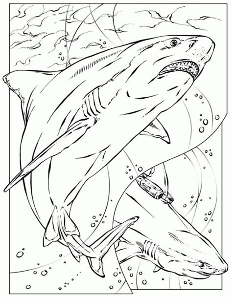 printable coloring pages of realistic animals realistic coloring page of shark for adults printable