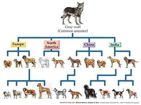 the domestication how wolves and humans coevolved books selective or artificial selection