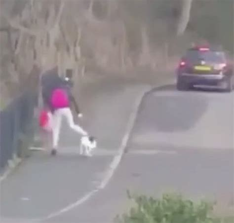 kicked puppy in care of rspca after filmed kicking and hitting animal in south
