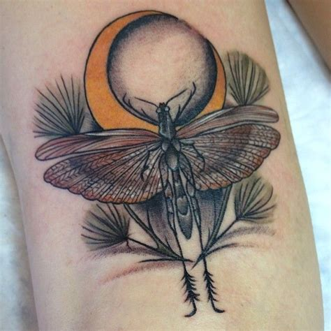locust tattoo 17 best images about on david hale
